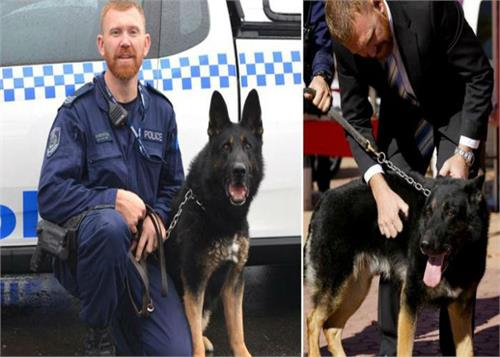 in australia beloved and brave pasari were in after the dog s death to the police station