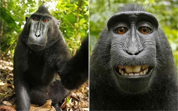 indonesia monkey became the person of the year