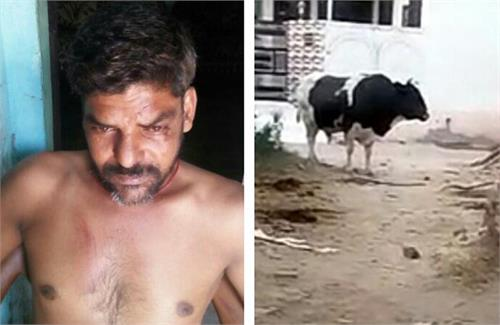 awaara sanh wounded a man cattle and injured him
