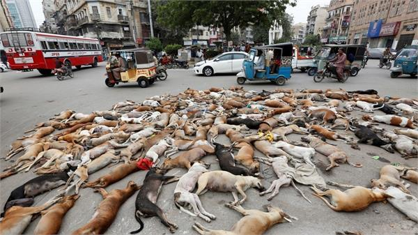 the viral picture of dead dogs on road