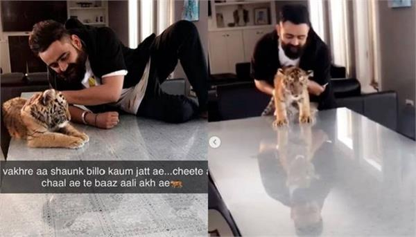 punjabi singer and actor amrit maan play with tiger viral video