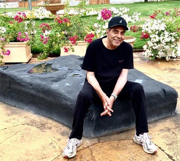 dharmendra share video of his cow on social media