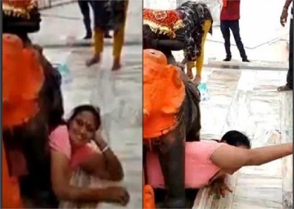 woman elephant idol video gujarat