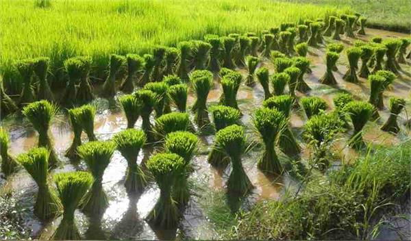 climate change impacts major crops in india