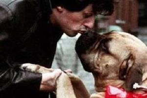 sylvester stallone sold his dog when he was poor