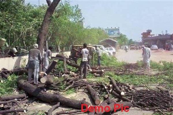 chandigarh  cutting trees  punjab government ministry of environment