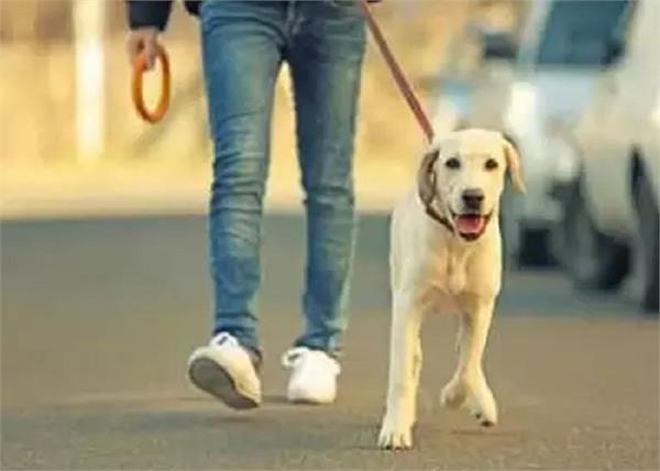 dog license fine ghaziabad