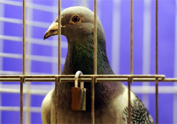 no kites  drones or pigeons allowed in china airspace this month