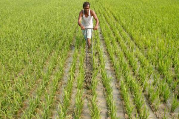 monsoon sharp agricultural commodity prices fall