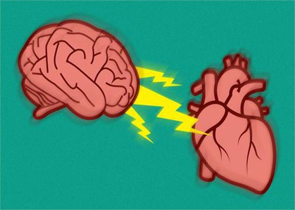 stress affects the heart  brain  and bowel