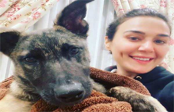 wow  dog saves preity zinta  s life  the actress shared the entire story