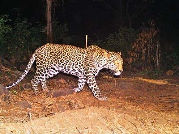 dhar child died in leopard attack