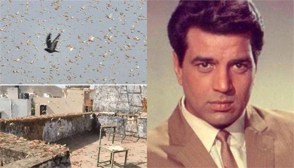dharmendra shares viral video of locust attack  says   be careful